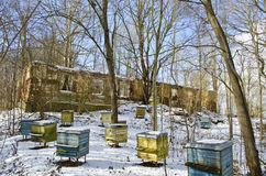Historical manor estate ruins and old  beehive group in winter Royalty Free Stock Image