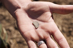 Historical,old, broken, Teutonic coin in open hand on archaeological background. Royalty Free Stock Photos
