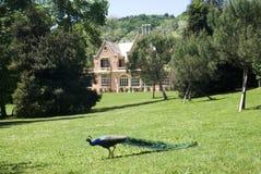 Historical park of Villa Serra Royalty Free Stock Photos
