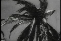 Historical reenactment of soldier shooting man hidden in palm tree stock video footage