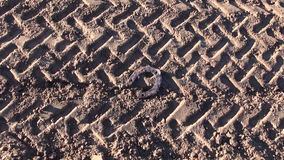 Historical rusty horseshoe and  tractor traces on soil stock video
