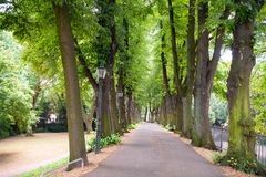Historical Alley with Trees in Dusseldorf Kaiserswerth, Germany Royalty Free Stock Images