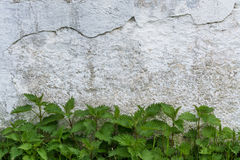 Historical wall with green plants Royalty Free Stock Photography