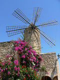 Historical windmill with flourishing Bougainvillea, majorca. Historical windmill with flourishing Bougainvillea and blue sky, majorca Stock Photos