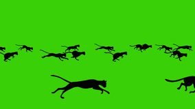 Historieta animada de un grupo grande de funcionar con gatos negros en un fondo de pantalla verde libre illustration