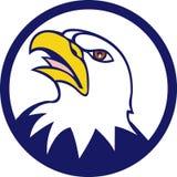 Historieta calva del círculo de Eagle Head Angry Looking Up Imagen de archivo libre de regalías