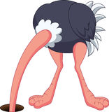 Historieta de la avestruz que oculta su cabeza en el agujero Imágenes de archivo libres de regalías
