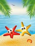Historieta de las estrellas de mar Foto de archivo