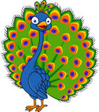 Historieta del pavo real Imagen de archivo libre de regalías