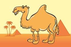 Historieta linda del camello en el fondo del desierto, de pirámides egipcias y de palmeras