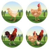 Historietas del pollo y del asador libre illustration