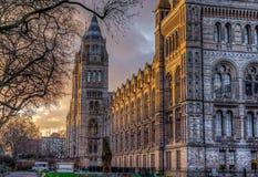 historii London muzeum naturalny Zdjęcie Stock