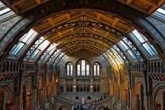 Historii Naturalnej muzeum, Londyn Zdjęcie Royalty Free