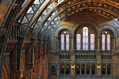 Historii Naturalnej muzeum, Londyn Fotografia Stock