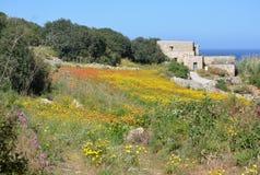 Historisch bouw met weide (Malta) Stock Afbeelding