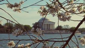 Historisch Cherry Blossom stock afbeeldingen