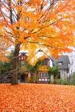 Historisch Huis Cranbrook Stock Afbeelding