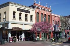 Historische Gebäude mit blühendem Baum des Frühlinges lizenzfreies stockbild