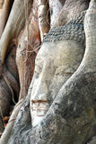 Historische Stad van Ayutthaya, Thailand royalty-vrije stock fotografie