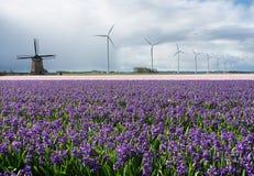 Historische und moderne Windmühlen mit Blumen Lizenzfreie Stockfotografie