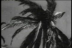 Historische Wiederinkraftsetzung des Soldatschießenmannes versteckt in der Palme stock video footage