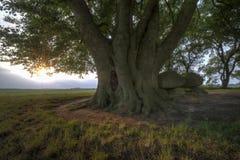 Historischer Dolmen in den Niederlanden lizenzfreies stockbild