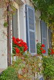 Historisches Gebäude mit Pelargonienblumenkästen Stockfotografie
