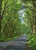 Historisk huvudväg, Oregon Fotografering för Bildbyråer