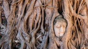 historisk park för ayutthaya arkivbilder