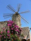 Historisk väderkvarn med blommandebougainvillean, majorca arkivfoton