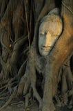 Historiskt Buddha huvud för UNESCO av Ayutthaya, Thailand royaltyfria bilder