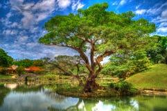 Historiskt parkera och arbeta i trädgården i Okinawa arkivbilder