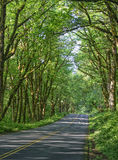 Historyczna autostrada, Oregon Obraz Stock