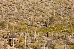 Historyczna kamienna kabina w Saguaro NP Tucson AZ USA Zdjęcie Stock