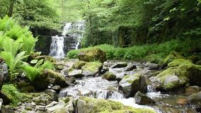 Historyczny młyn rujnuje siklawy skalistą i zieloną lasową dolinę w pustkowiu zdjęcie wideo