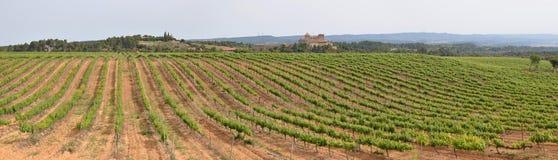 Hiszpańska plantacja winorośle Zdjęcia Royalty Free