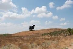 Hiszpański byk fotografia stock