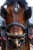 Hiszpański koń zdjęcia royalty free