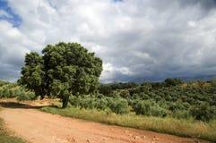 hiszpański krajobrazu Zdjęcie Stock