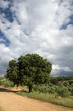 hiszpański krajobrazu Fotografia Royalty Free