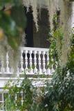 Hiszpański mech przed Białym balkonem Obraz Stock