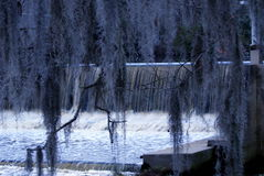 Hiszpański mech przy Trenton młynem w Pólnocna Karolina Obraz Stock