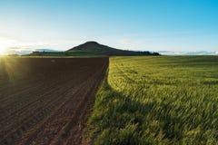 Hiszpańszczyzny kształtują teren z niebieskim niebem, zielonym kubkiem i świeżą czerni ziemią, zdjęcie stock