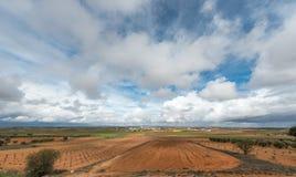Hiszpańszczyzny suszą uprawy Zdjęcia Royalty Free