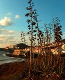 hiszpański krajobrazu Obrazy Stock