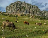 Hiszpania góry krowa Obrazy Stock