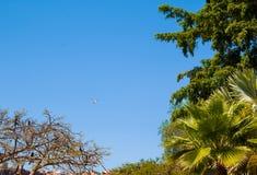 Hiszpania Ja przedstawia różnych gatunki kaktus, tropikalne rośliny i ogród, Zdjęcia Stock