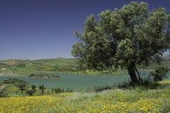 Hiszpania krajobraz Obrazy Royalty Free