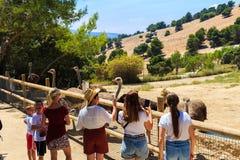 Hiszpania, Penaguila, Aitana safari park - Czerwiec 21, 2019: Turyści biorą obrazki strusie w safari parku Aitana obrazy stock
