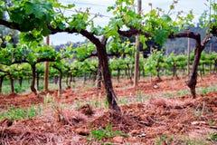 Hiszpania regionu wina inscenizowanie, winogradów pola Obrazy Royalty Free